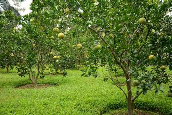 Đất trồng cây lâu năm là gì?